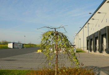 Lagerhalle mit Dienstleistungen bis 4500 m2 - Standort Klatovy.