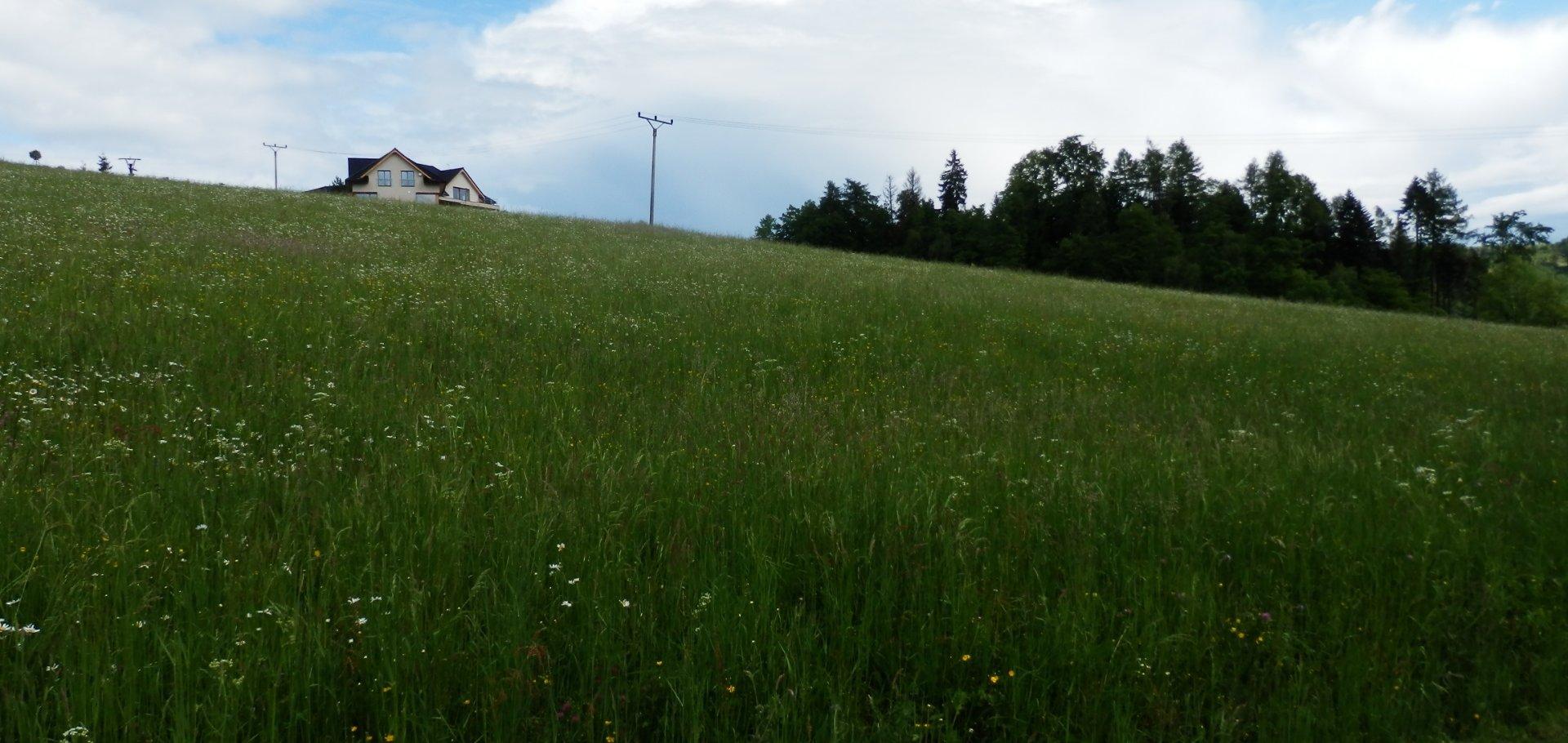 Prodej pozemku obec Valašské Meziříčí, část Podlesí o rozloze 1223m2