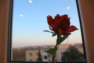 IMG_7922a