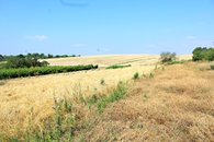 IMG_9894a