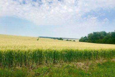Prodej, Pozemky pro bydlení, 600 m² - Havlíčkův Brod - Zboží, Ev.č.: 00336