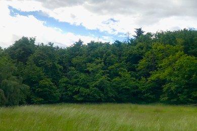 Prodej lesní pozemek, 60.000 m², Hojkov u Jihlavy, Ev.č.: 00630
