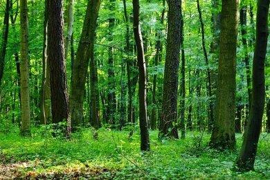 Prodej lesních pozemků, 0,42 ha, Častrov - Metánov, Ev.č.: 00690