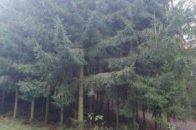 Prodej lesa 37063m² - Blízkov, Ev.č.: 00886