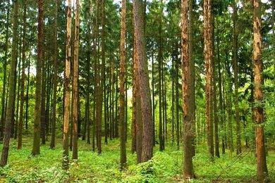 Prodej lesního pozemku 83.354 m2, Veveří u Nových Hradů, Ev.č.: 00924