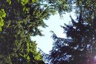 Les olešnice obrázek