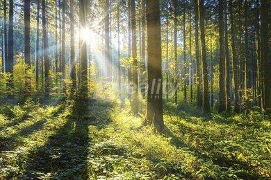Prodej lesní pozemek, 18.924 m², Olešnice u Trhových Svinů, Ev.č.: 00999