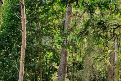 Prodej souboru lesních pozemků, 6.650 m2, Kožichovice, Ev.č.: 01181