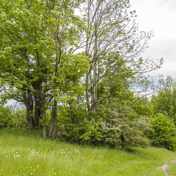 Prodej lesních a dalších pozemků - Hutisko, Vigantice.