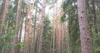 Lesy  21213 m² v okolí Veselí nad Lužnicí