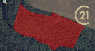 Prodej lesa, Drozdov, okr. Šumperk 31 517 m2