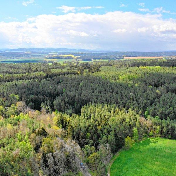 Prodej lesa, 5029m2, Štichov, okres Domažlice