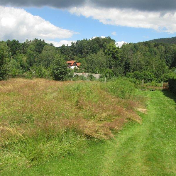 Pozemek u lesa, 3007 m², Křižany, Liberecký kraj