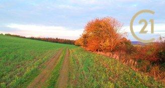 Nabízíme pozemek v katastru obce Ondřejov o výměře 5 700m2