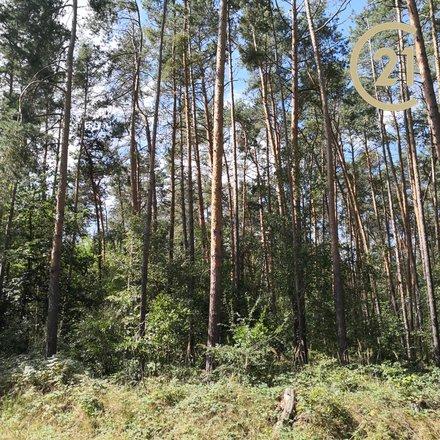 Prodej lesa 10.815 m², Dřísy – Praha východ
