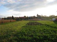 Prodej pozemku v lokalitě Krumvíř, okres Břeclav - obrázek č. 4