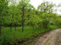 Prodej pozemku v lokalitě Ivančice, okres Brno-venkov - obrázek č. 2