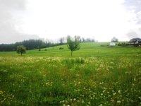 Prodej pozemku v lokalitě Petrovice, okres Blansko - obrázek č. 2