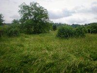 Prodej pozemku v lokalitě Tišnov, okres Brno-venkov - obrázek č. 3