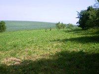 Prodej pozemku v lokalitě Bučovice, okres Vyškov - obrázek č. 3