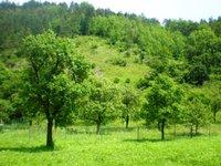 Prodej pozemku v lokalitě Blansko, okres Blansko - obrázek č. 2