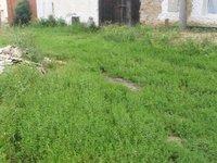 Prodej pozemku v lokalitě Pustiměř, okres Vyškov - obrázek č. 7