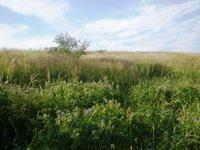 Prodej pozemku v lokalitě Kotvrdovice, okres Blansko - obrázek č. 4