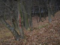 Prodej pozemku v lokalitě Újezd u Černé Hory, okres Blansko - obrázek č. 2