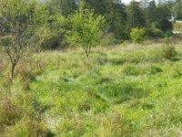Prodej pozemku v lokalitě Milonice, okres Blansko - obrázek č. 2