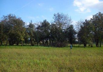 Prodej pozemku v lokalitě Kozlany, okres Vyškov - obrázek č. 1