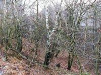 Prodej pozemku v lokalitě Brodek u Konice, okres Prostějov - obrázek č. 7