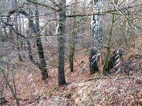 Prodej pozemku v lokalitě Brodek u Konice, okres Prostějov - obrázek č. 4