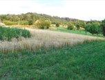 Železné, louka 1740 m2, příjezd, možnost studny, elektřina 150 m - pozemek - Pozemky Brno-venkov