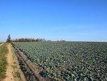 Ježkovice, orná půda, ostatní plocha,  4 130 m² - pozemek - Pozemky Vyškov