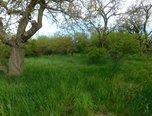 Znojmo, zahrada 609 m2, elektřina, voda, ovocné stromy - zahrada - Pozemky Znojmo