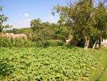 Oleksovice, pozemek pro výstavbu rodinného domu 1131 m² - pozemek - Pozemky Znojmo