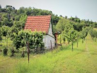 Prodej pozemku v lokalitě Tvarožná, okres Brno-venkov - obrázek č. 4
