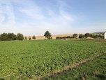 Komárov, orná půda, stavební parcela, 1 386 m2 – pozemek - Pozemky Olomouc