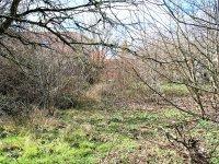 Prodej pozemku v lokalitě Syrovice, okres Brno-venkov - obrázek č. 3