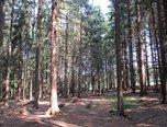 Suchý – okres Blansko, lesní pozemek, 25 356 m2, lesní hospodářství – pozemek - Pozemky Blansko