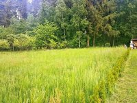 Prodej pozemku v lokalitě Radenice, okres Žďár nad Sázavou - obrázek č. 4