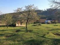 Prodej domu v lokalitě Silůvky, okres Brno-venkov - obrázek č. 3