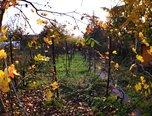 Brno – Maloměřice, chatka, zahrada 427 m2 – pozemek - Pozemky Brno