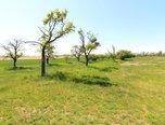 Hrotovice, ovocný sad 3.321 m2, vzrostlé ovocné stromy  – pozemek - Pozemky Třebíč