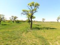 Prodej pozemku v lokalitě Hrotovice, okres Třebíč - obrázek č. 5