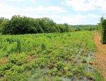 Vedrovice, stavební parcela 1000 m2, sítě na hranici pozemku - pozemek - Pozemky Znojmo
