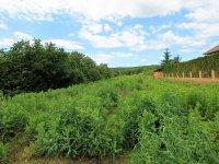 Prodej pozemku v lokalitě Vedrovice, okres Znojmo - obrázek č. 2