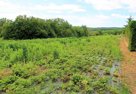 Prodej pozemku v lokalitě Vedrovice, okres Znojmo - obrázek č. 1