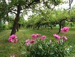 Znojmo, zahrada 1.070 m2, zahradní domek, ovocné stromy – pozemek - Pozemky Znojmo