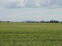 Prodej pozemku v lokalitě Kobylnice, okres Brno-venkov - obrázek č. 2